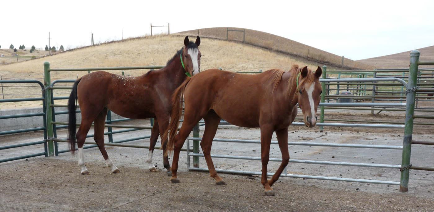 horse-slide