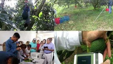 INIFAP, PROCINORTE y Felix Instruments imparten curso de Capacitacion a productores, Empacadores y Tecnicos de Aguacate 'HASS'