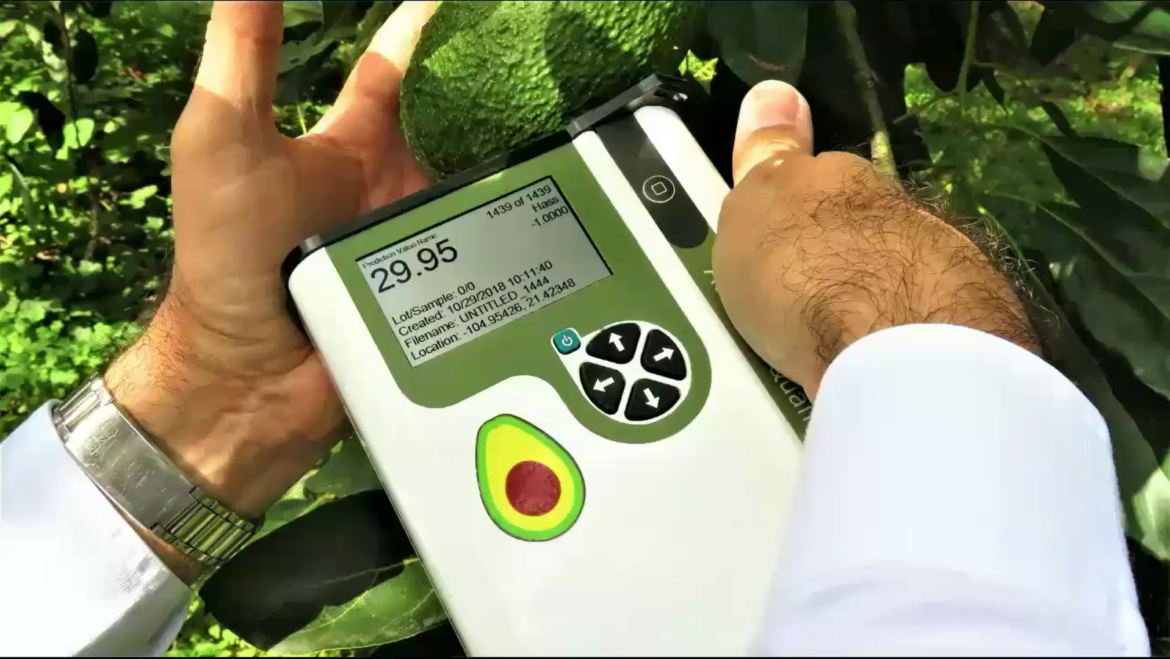 Boost for Mexican Avocado industry